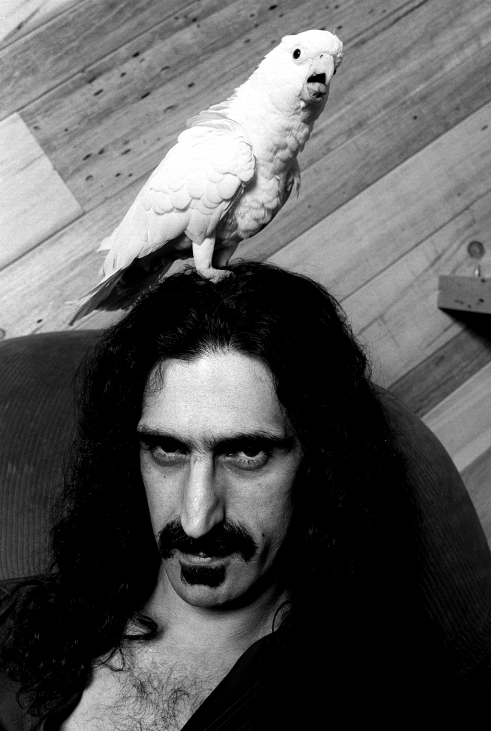 Frank Zappa, Hollywood, 30. April 1979